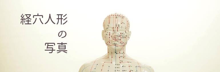経穴人形の写真_鍼灸東洋医学関連写真販売(C)東洋医学・鍼灸・漢方辞典